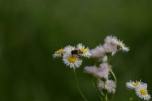 ボケましょう蜜蜂編