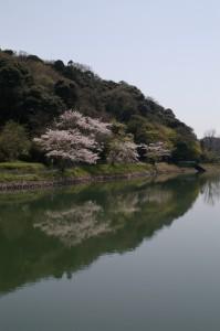 桜と八幡湖