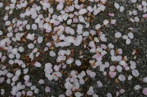 路上の花弁